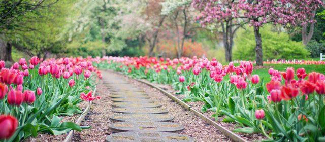 Zakładanie i pielęgnacja ogrodów – cennik