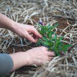 Jak chronić rośliny przed insektami i chwastami?