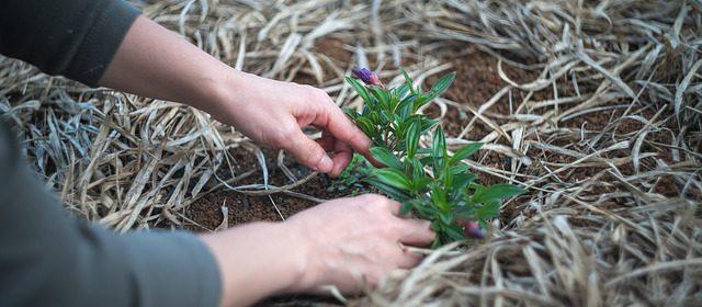 Wiosenne prace w ogrodzie. Co trzeba zrobić w ogrodzie wiosną?