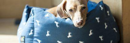 Jak dobrać legowisko dla psa?